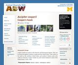 Accipiter cooperii: Information