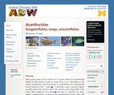 Acanthuridae: Information