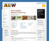 Acris crepitans: Information