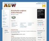 Acrochordus arafurae: Information