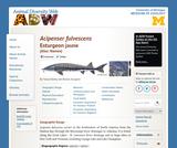 Acipenser fulvescens: Information