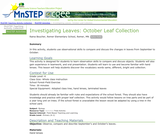 Investigating Leaves: October Leaf Collection