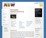 Acris gryllus: Information