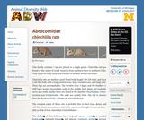Abrocomidae: Information