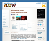 Acanthaster planci: Information
