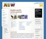 Accipiter gentilis: Information